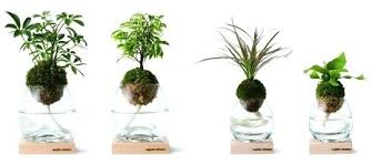 office cubicle plants. Great Office Plants Stanza Botanical Candle Torch Best Cubicle .