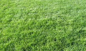 tall grass texture seamless. Grass Texture II Tall Seamless