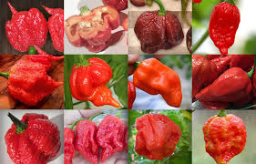 Top 12 Hottest Peppers In The World 2019 Cayenne Diane