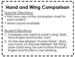 Hand Comparison Chart Bat Unit Materials Human Hand And Bat Wing Comparison Chart