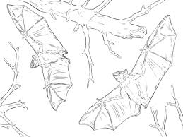 Small Picture Common Fruit Bats coloring page Free Printable Coloring Pages
