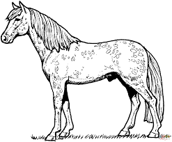 Small Picture Horses Coloring Pages Free And Realistic Horse zimeonme