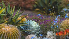 Desert Garden, Desktop Wallpaper, Happy ...
