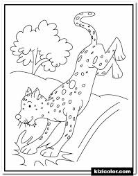 A cheetah can accelerate from 0 to 113 km in just a few seconds. Cheetah S Free Print And Color Online