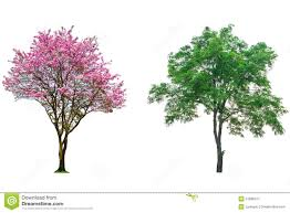 flower tree pictures. Fine Flower Pink Flower Tree To Flower Tree Pictures