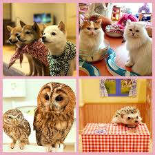 Most Popular Pets The Most Popular Pet Cafes In Tokyo Yumetwins The
