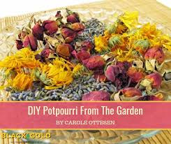 potpourri is a mixture of aromatic plant parts that captures the essence of the growing season for yearlong enjoyment to create your own gather leaves and