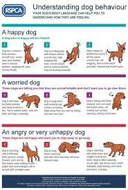 Cat Body Shape Chart Dog Body Language Chart Decoding Behavior Dog Body