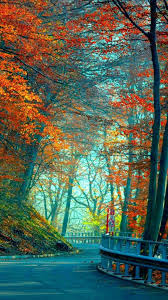 Long Road in Red Trees