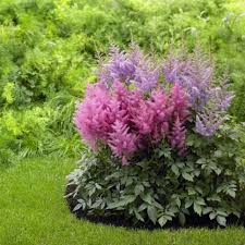 Shade Garden Design Zone 4 Perennial Flowers For Shade Gardens Hgtv