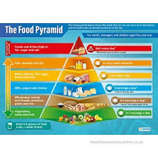 Food Pyramid Science Posters Laminated Gloss Paper Measuring 850mm X 594mm A1 Science Charts For The Classroom Education Charts By Daydream