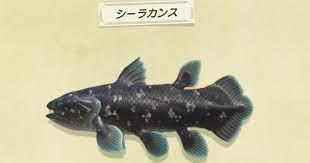 あつ 森 雨 の 日 しか 釣れ ない 魚