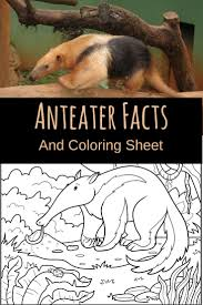 Small Picture Anteater Facts Animal That Starts With Letter A Educational