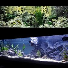Aquarium backgrounds, Aquarium, Fish tank