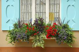 A simple beige window box overflowing with vines, flowers, and other  colorful plants beneath