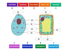 Leaves take in energy via sunlight and capture carbon dioxide from the air. Animal And Plant Cell Teaching Resources