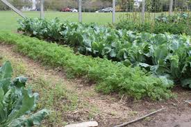 Kitchen Garden Farm In Pursuit Of Gnocchi At Barboursville