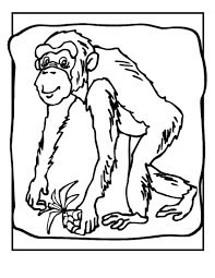 Small Picture Adult chimpanzee coloring pages Chimpanzee Coloring Pages Baby