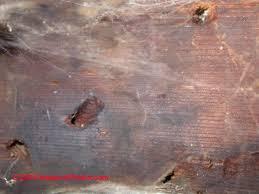 signs of risk of termite c daniel friedman