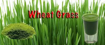 Wheatgrass Nutrition Chart Wheatgrass Nutritional Facts Health Benefits Side