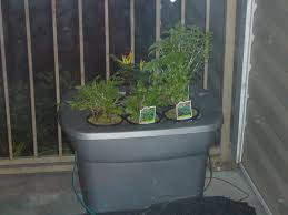 picture of hydroponics at home and for beginners