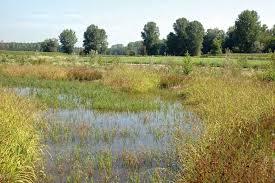 Risultati immagini per pianure alluvionali bioregionali  vedi