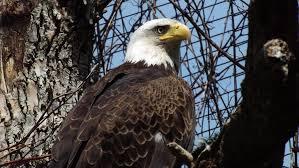 ed primeau blog audio video forensic expert part  the eagles toledo zoo