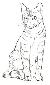 cat drawing outline. Perfect Outline How To Draw Cat Step 5 To Cat Drawing Outline U