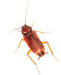 cockroach control london ontario