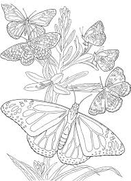 Small Picture Butterfly Coloring Page
