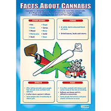 Uk Chart Facts Facts About Cannabis Wall Chart Poster Amazon Co Uk