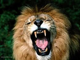 Dessin Lion Bouche Ouvertel