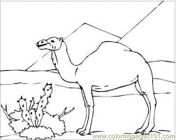 Small Picture Camel In Desert Coloring Page Coloring Page Free Camel Coloring