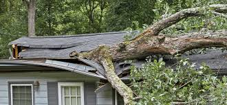 Who is Responsible for the Damage Caused by that Fallen Tree?