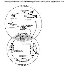 Online Venn Diagram Practice Ielts Academic Writing Task 1 Model Answer Venn Diagram Life