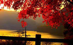 Autumn leaves wallpaper ...
