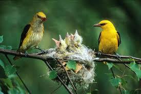 Resultado de imagen de nidos de pájaros