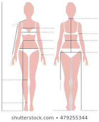 Body Size Chart Images Stock Photos Vectors Shutterstock