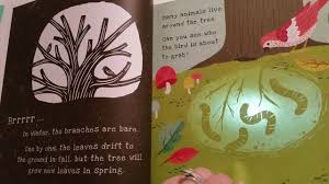Shine The Light Usborne Shine A Light Secrets Of The Apple Tree Usborne Books More