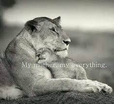 lioness and cubs quotes. Unique And For Lioness And Cubs Quotes