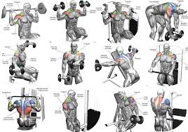 Shoulder Workout Routines Shoulder Workout Routine