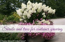shrubs and trees for container growing image link