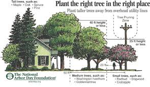 Image result for landscaping trees
