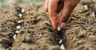 tips on how to start a vegetable garden