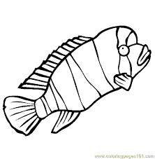 Small Picture Humphead Cichlid Coloring Page Free Other Fish Coloring Pages