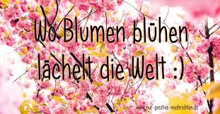 Wo Blumen Blühen Lächelt Die Welt Spruch Zum Valtentinstag Nur