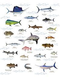 Fish Species Bolo Team