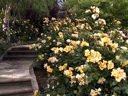 Small Picture Cut Flower Garden HGTV