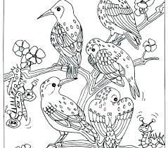 bird coloring book pages angry birds coloring pages bird birds coloring pages coloring book birds bird bird coloring book