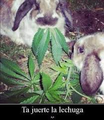 Memes sobre la marihuana